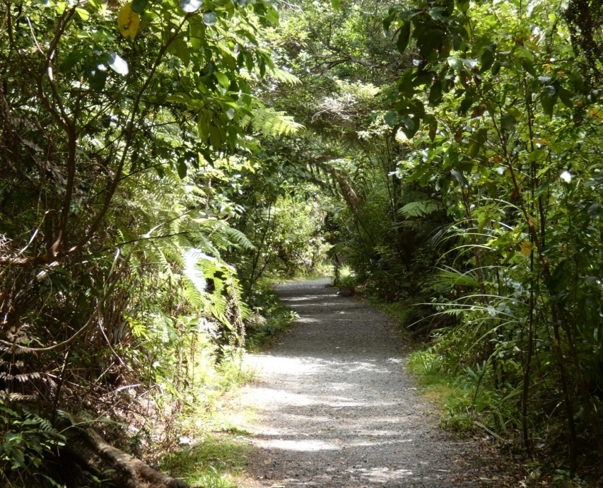 Guided bush walks in Whakanewha Regional Park on Waiheke Island