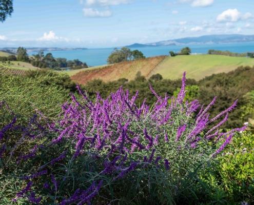 Views from Luxury Accommodation at Woodside Bay Waiheke Island